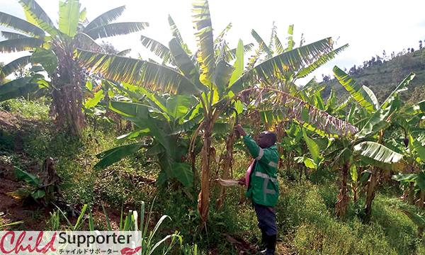 WEB_ルワンダ貧しい農家.jpg