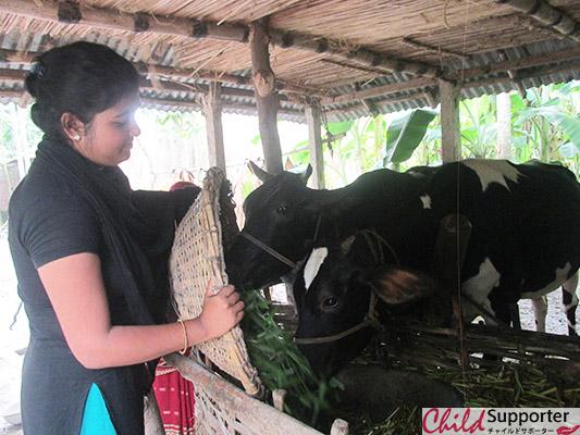 WEB_Urmi Feeding cattle.jpg